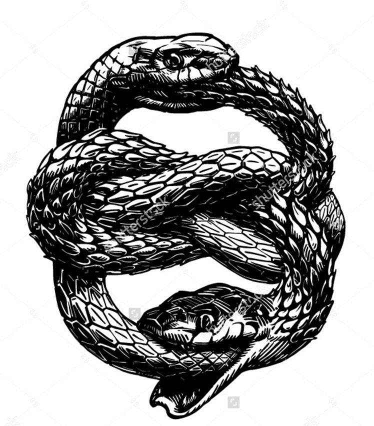 AN IMAGE OF TWO SNAKES TRYING TO EAT ONE ANOTHER BUT ACTUALLY EATING THEMSELVES